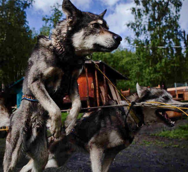 Abenteuerhundeschlitten!