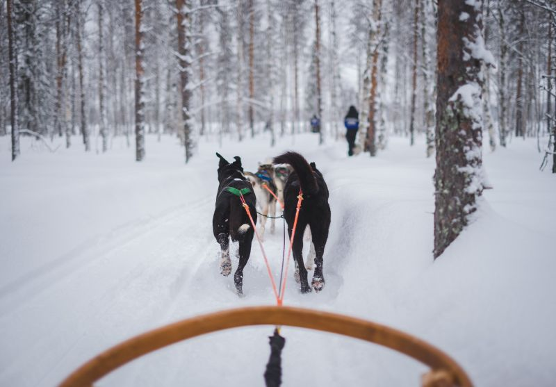 Adventure mushing!